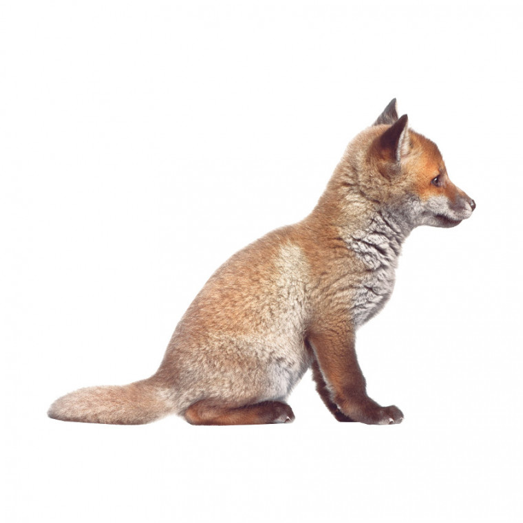 KEK AMSTERDAM Muursticker Forest Friends Fox Cub