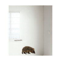 KEK AMSTERDAM Forest Friends Muursticker Hedgehog XL
